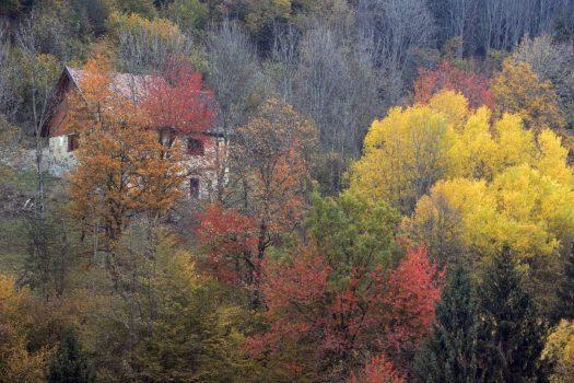 Foliage in Carnia: 2 itinerari per non perdersi  lo spettacolo autunnale