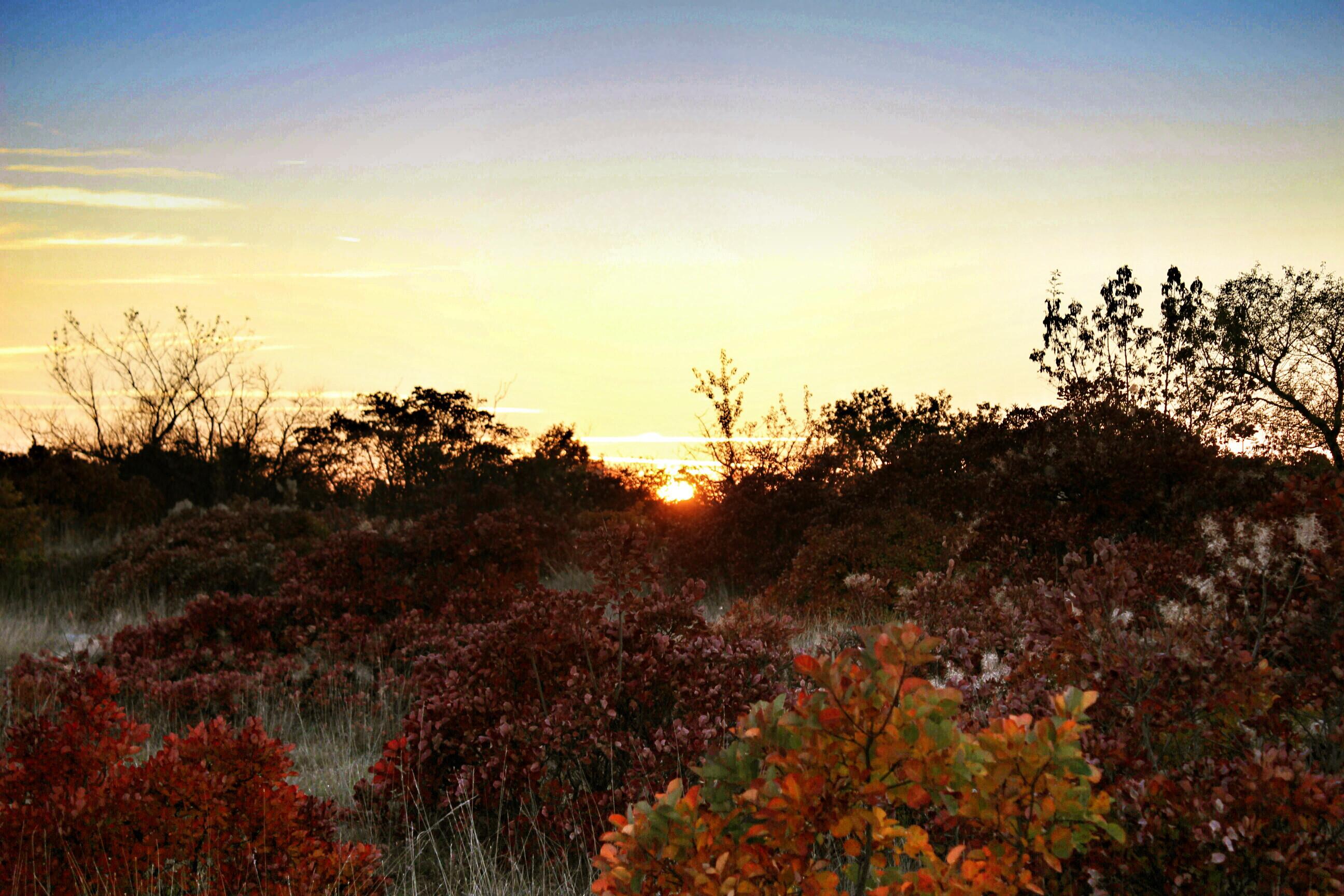 autunno-e-sapori-del-carso-25