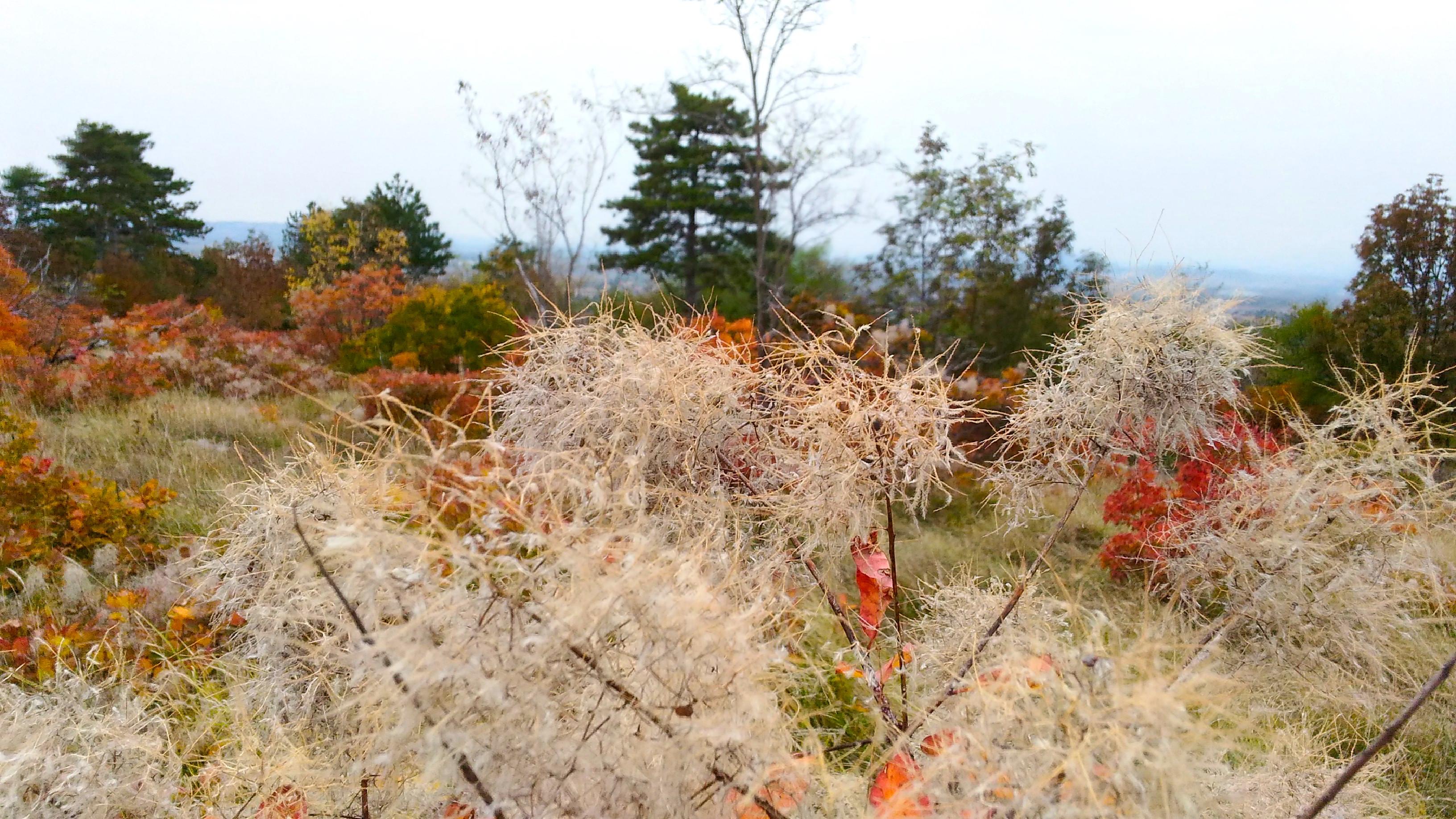autunno-e-sapori-del-carso-3